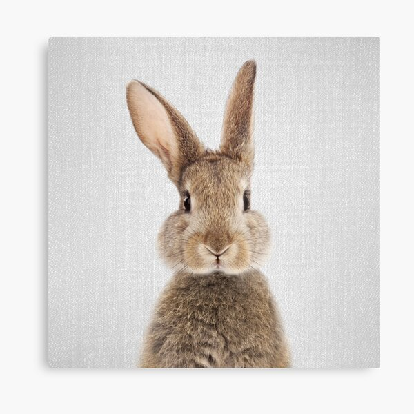 Kaninchen - bunt Leinwanddruck