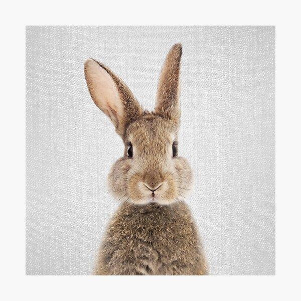 Conejo - Colorido Lámina fotográfica