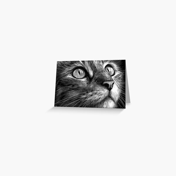 Cat's face - scratchboard art Greeting Card