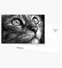 Cat's face - scratchboard art Postcards