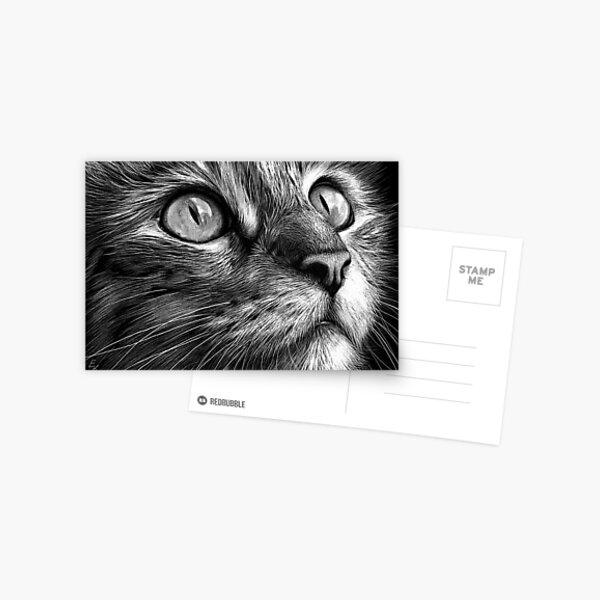 Cat's face - scratchboard art Postcard