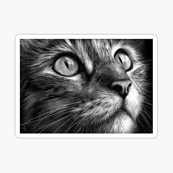 Cat's face - scratchboard art Sticker