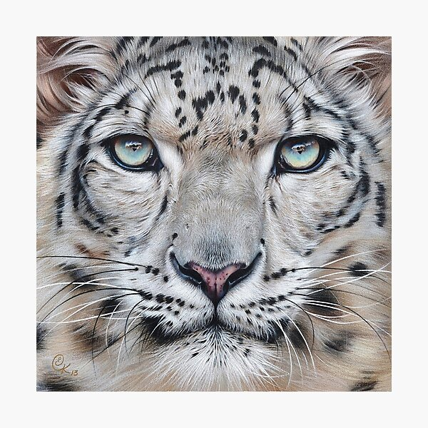 Faces of the wild - Snow Leopard Photographic Print