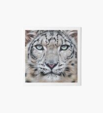 Faces of the wild - Snow Leopard Art Board