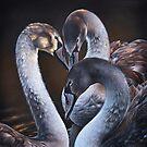 Swan Whispers by Elena Kolotusha