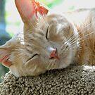 An Angel While Asleep! by Ellen Cotton