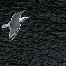 Seagull 1 by Larry Kohlruss