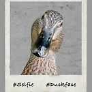 #duckface - close up of a duck looking to camera by Sara Sadler