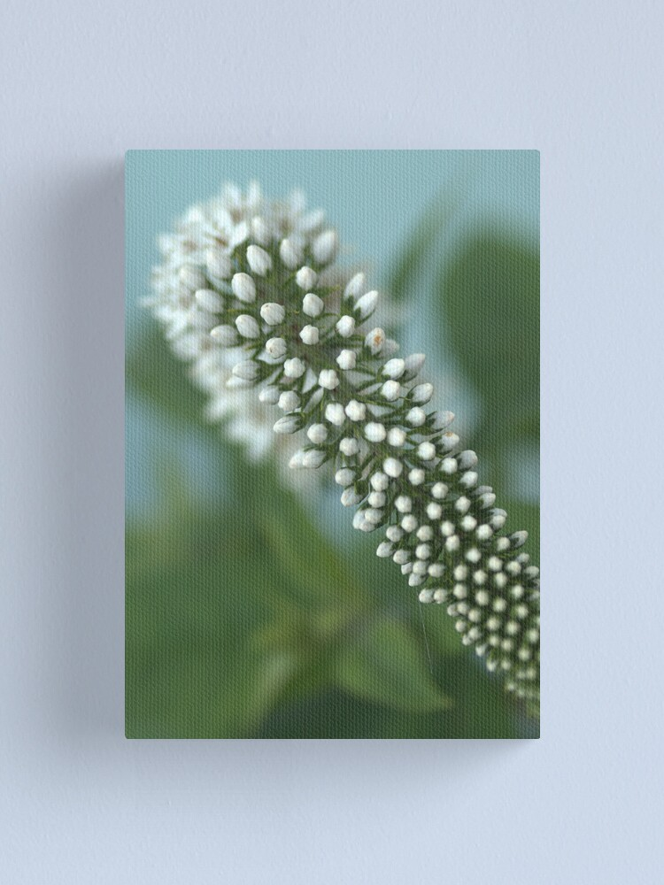 Alternate view of Cone flower Canvas Print