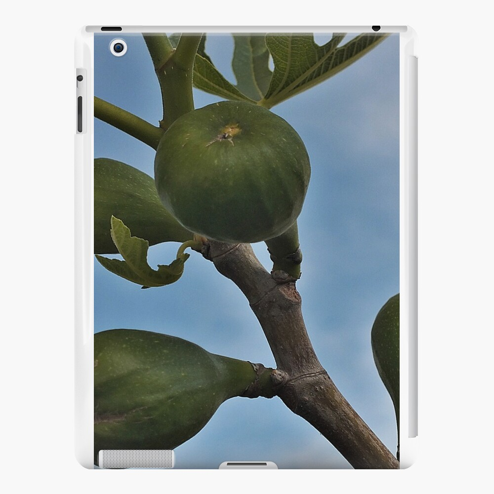 Feige iPad-Hüllen & Klebefolien