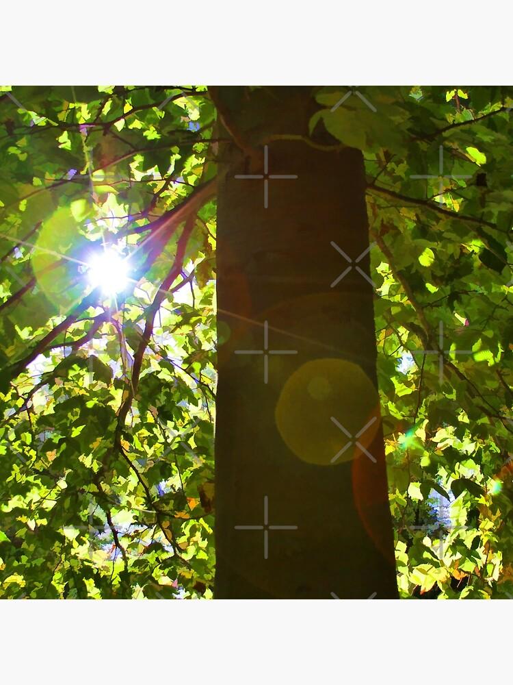 Tree of Light by csegalas