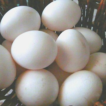 All My Eggs In One Basket by MaeBelle