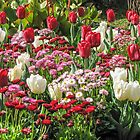 Butcharts Gardens - Floral display by DPalmer