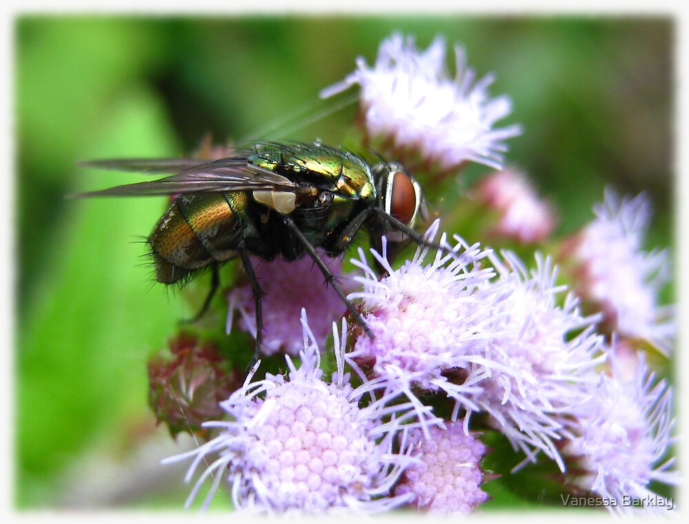 Fly On Flower by Vanessa Barklay