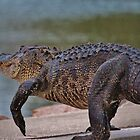 Giant Alligator  by Cynthia48
