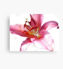 Pink Lily in watercolour Canvas Print