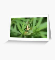 grasshopper in the grass Greeting Card