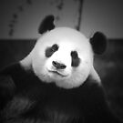 Giant Panda by Leanne Allen