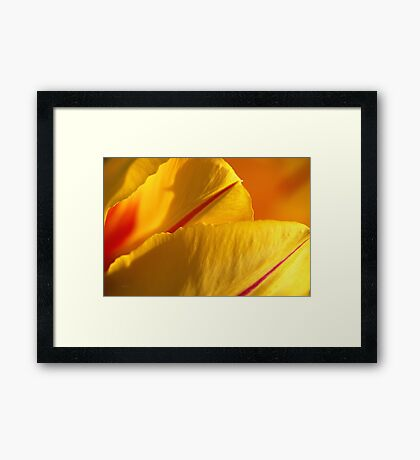 Bright Yellow And Red Tulip Framed Print