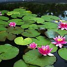 Water Lily Pond, Photograph by Vic Potter by Vic Potter
