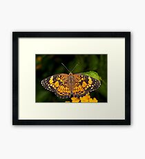 Little Pearl Crescent Butterfly Framed Print