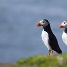 Puffins by Rob Parsons (Just a Walker with a Camera)