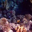 Mysterious Underwater World by hurmerinta