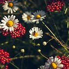 the bee sits on a chamomile by Danysharipova