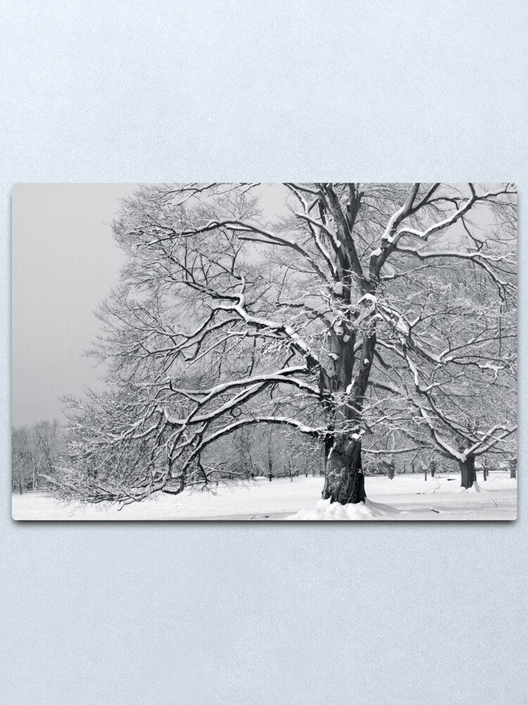 Alternate view of Connecticut Magnificence in the Form of a Tree Metal Print