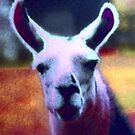 Love Llamas by hdettman