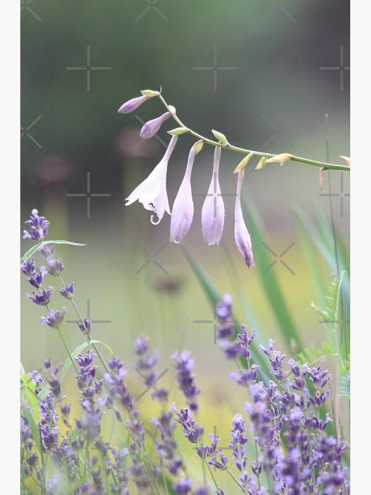 Pretty in lavender by debfaraday