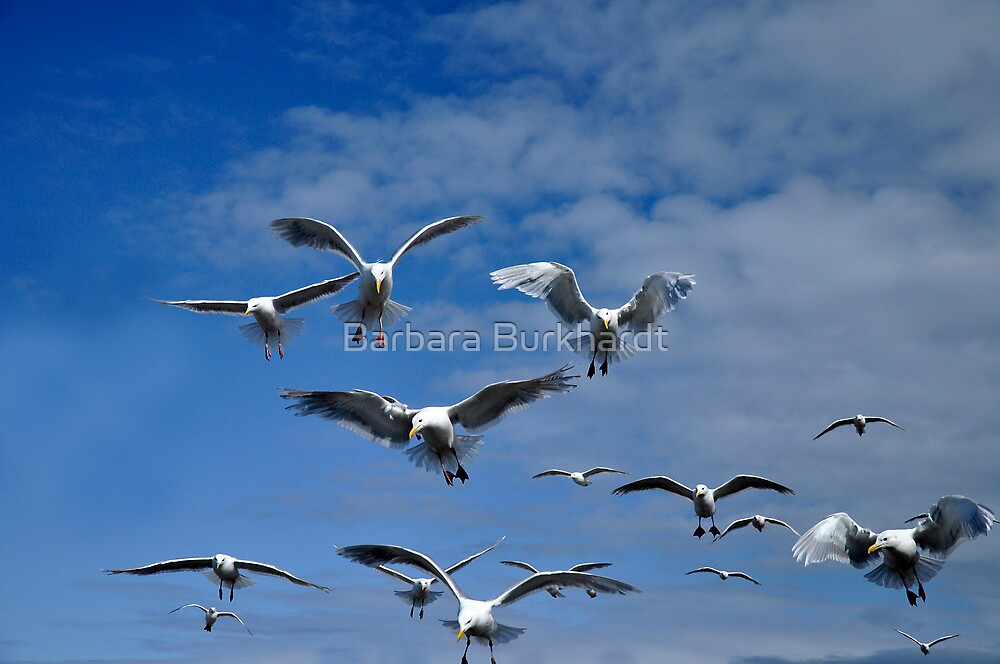 A Flurry of Wings by Barbara Burkhardt