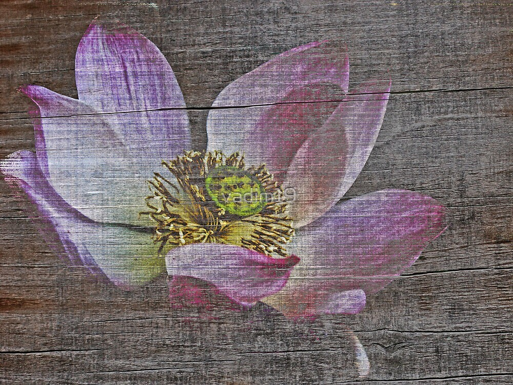 Lotus from Thailand by vadim19