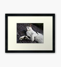 Oh Those Silly Silly Birds Framed Print