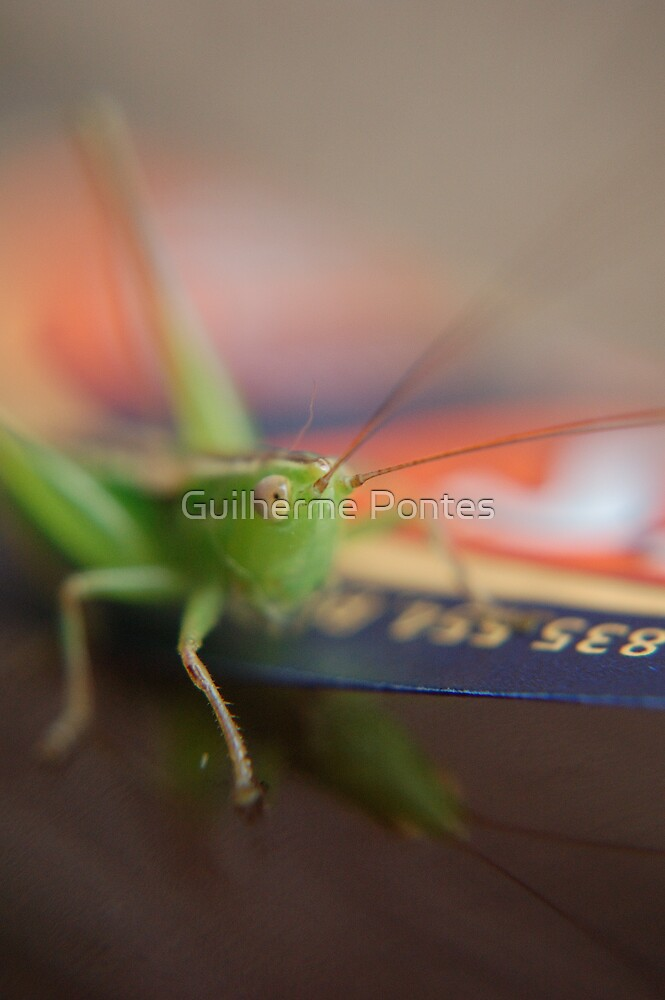 Cricket on Speight by Guilherme Pontes