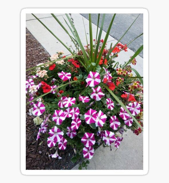 Flower pot by Pixel50