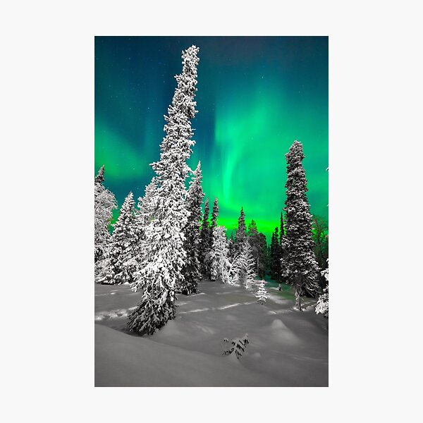 Northern Lights, Aurora Borealis, Arctic, Winter, Alaska Photographic Print