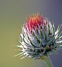 Promise of a Thistle by Corri Gryting Gutzman