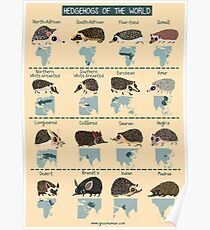 Hedgehogs of the World Poster