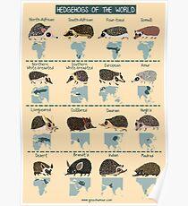 Igel der Welt Poster