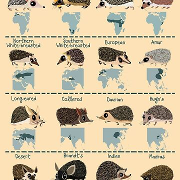 Hedgehogs of the World by rohanchak