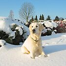 Ditte in the snow by Trine