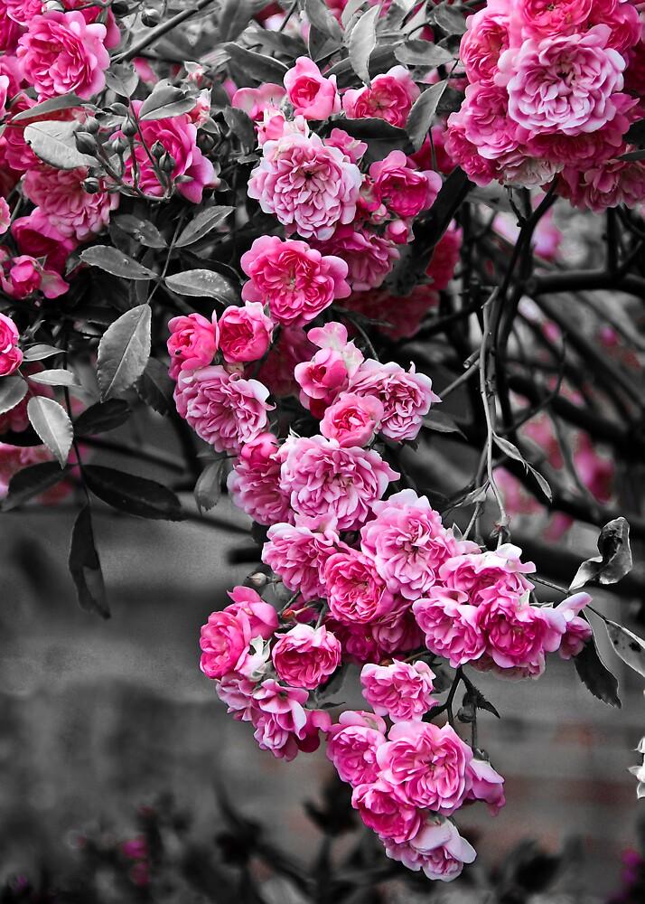 Blossom Rose Tree by Svetlana Sewell