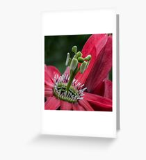 Pink macro flower Greeting Card