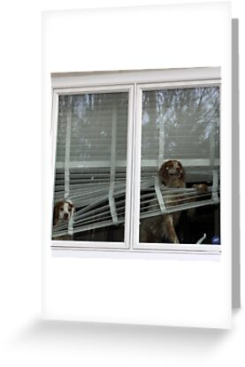 Dogs At the Window by csegalas