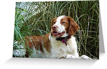 Dog in the Grass by csegalas