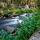 Mitchell Creek by Gary Lengyel