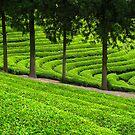 Green Tea Delight by Bobby McLeod