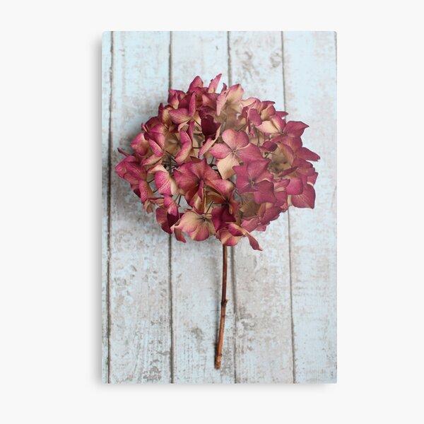 Pink Dried Hydrangea Metal Print