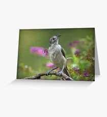 Curious Stare Greeting Card